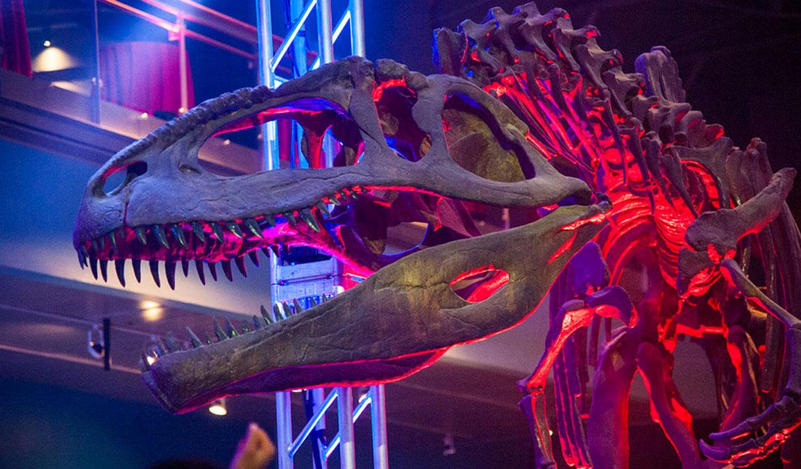 dinosaur bones at the science center